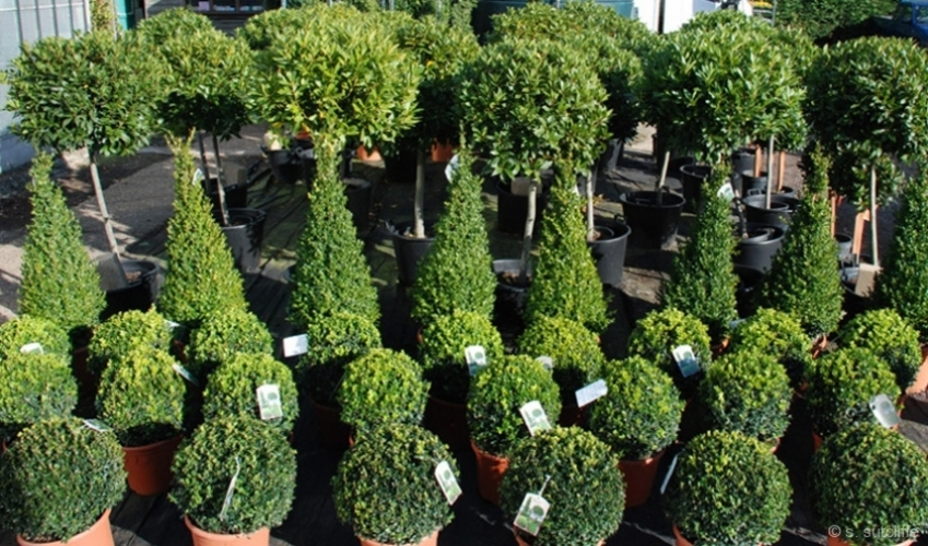 topiary1