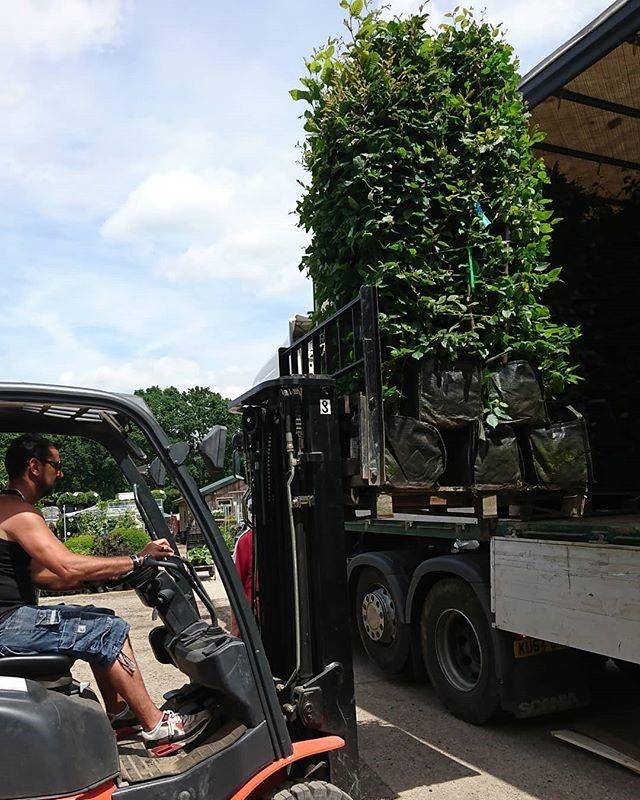 instant hedging smaller