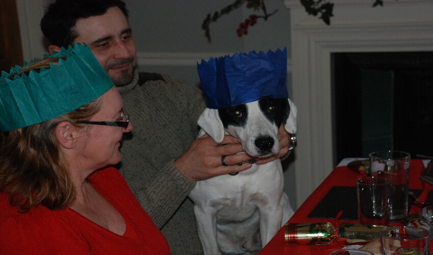 Tonto the nursery dog wearing a blue christmas cracker hat sitting on the lap of one of the How Green workers at their staff Christmas meal
