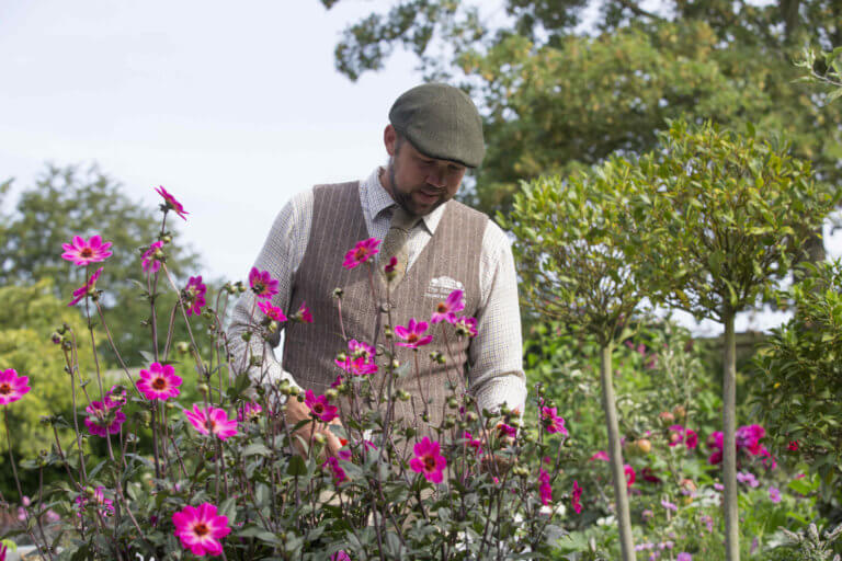 Photo of head gardener Steve Edney amongst pink Dahlias