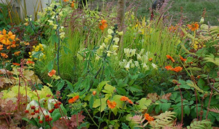 A colourful display of some of our plants including Geums